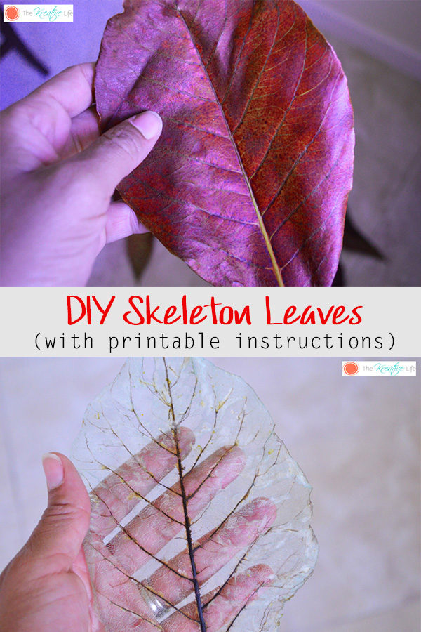 This diy skeleton leaf tutorial will show you how to make skeleton leaves to use as decor in your home. - The Kreative Life